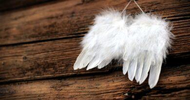 feather-andjeli-pero-pera